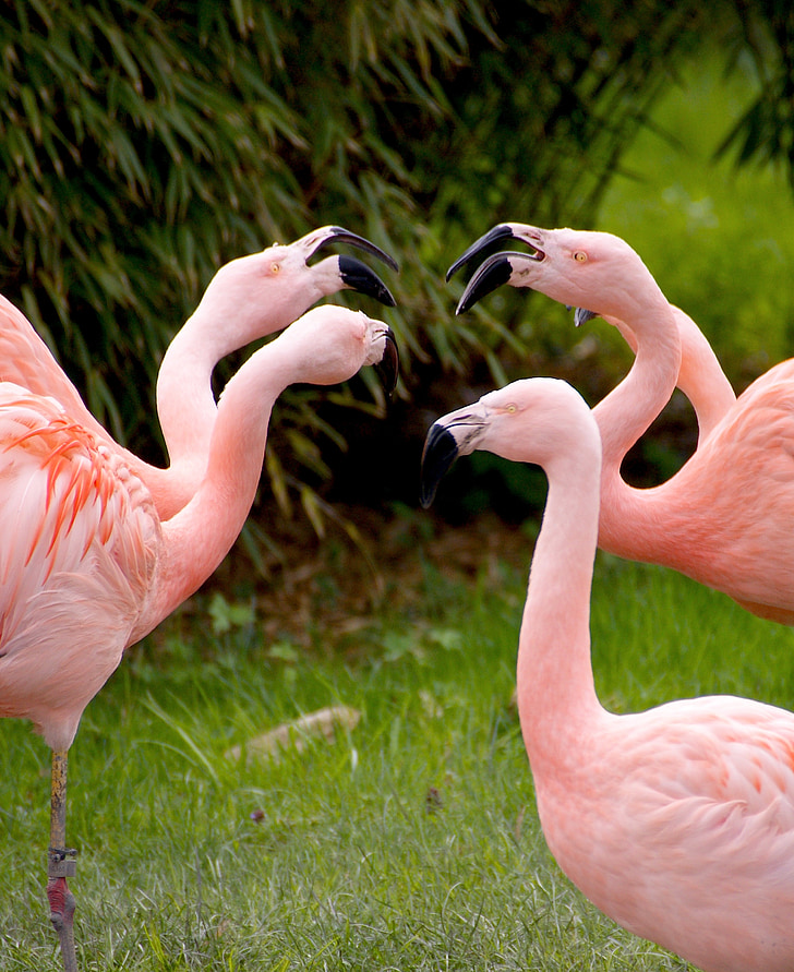 flamingo herd on grass field during day time
