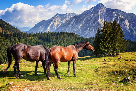 two brown horses near green leafed trees