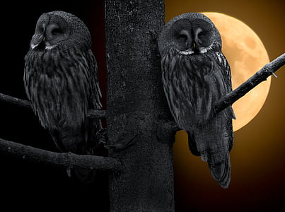 two black owls on tree