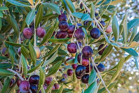 purple fruit on green leaf trees