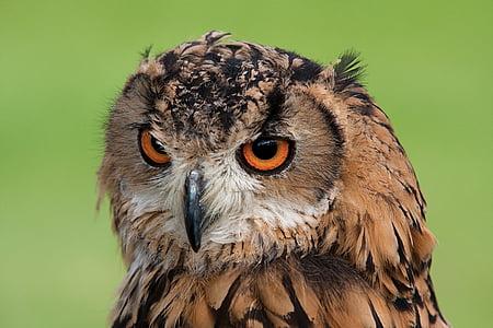 tilt shift lens photography of brown owl