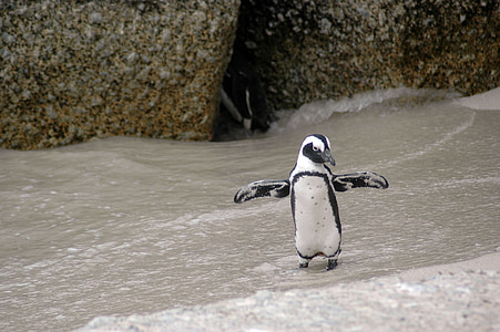 photo of white and black penguin on sand