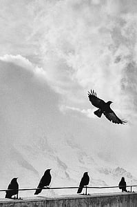grayscale photography of five birds