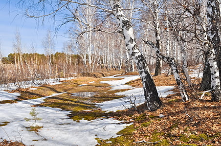 wide angle photo of leafless trees
