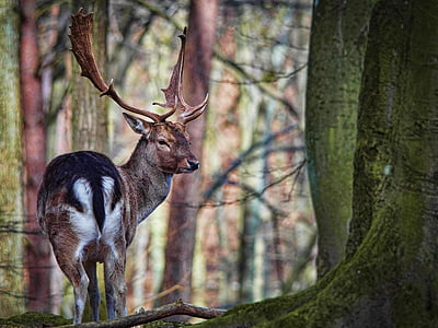 brown reindeer on forest