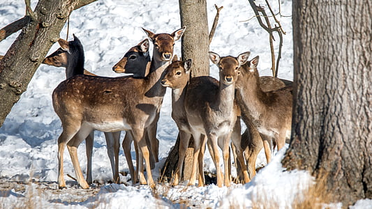 herd of young deers in the middle of trees on snowy field