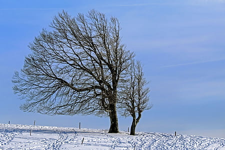 two leafless trees with coated snow pathway
