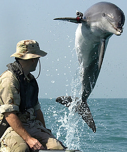 man sitting on boat near playing tricks dolphin