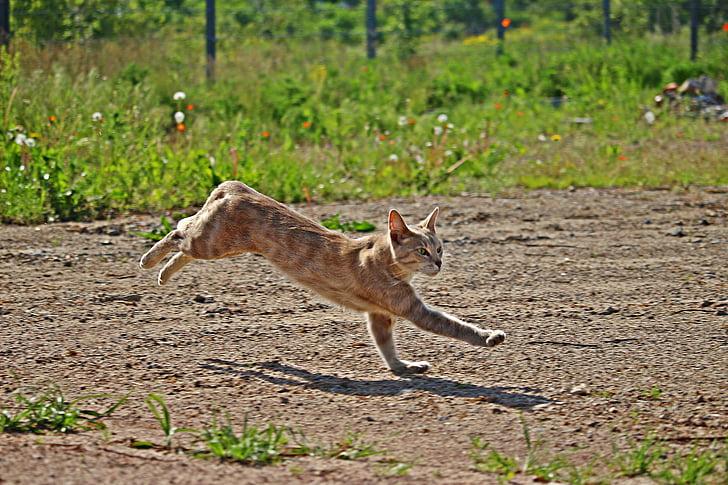 orange tabby cat running on field
