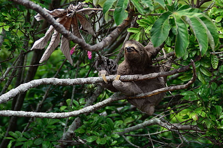 sloth animal on branch