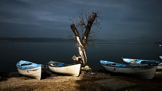 four white-and-blue canoes near bare tree