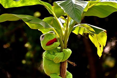 Kermit the frog hugging banana tree