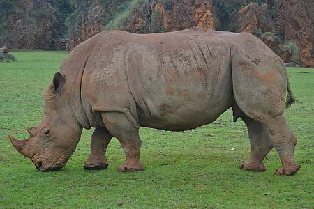 brown rhinoceros walking during daytime