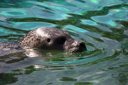 black and gray sea lion on body of water