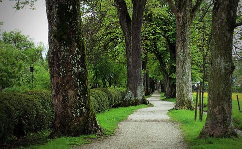 gray pathway between trees