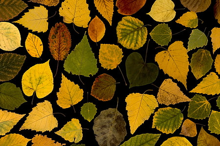 assorted-color leaf lot