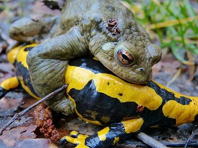 closeup photo of green frog