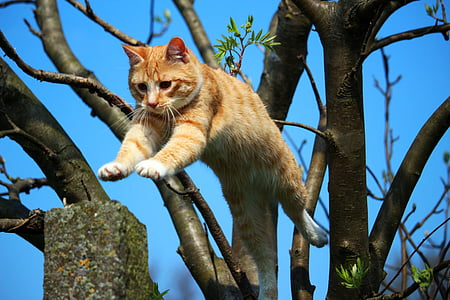 orange tabby cat jumping on tree