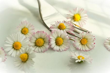 close-up photo of white ox-eyed daisy flowers