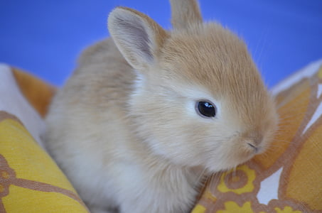 brown rabbit on orange textile