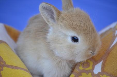 brown rabbit on orange textile