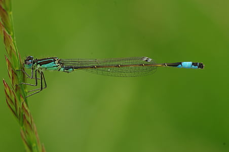 green damselfly perched on green leaf at daytime