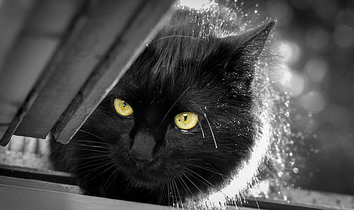 grayscale photo of black cat