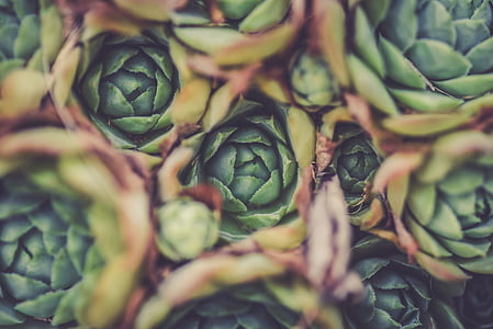 aerial photography of green succulent flowers