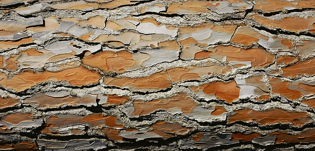 bark, wood, tree, structure, brown, texture
