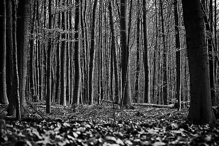 grayscale photography of woods
