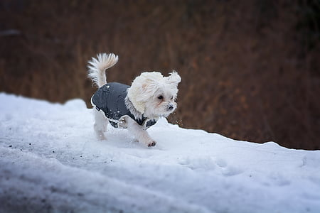 white puppy walking on snow