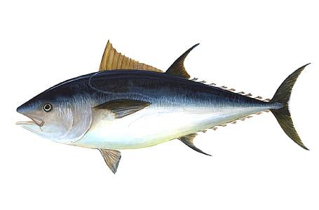 blue and gray tuna illustration