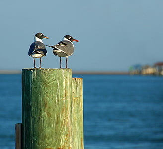 two gray-and-white birds on top of wood pillar