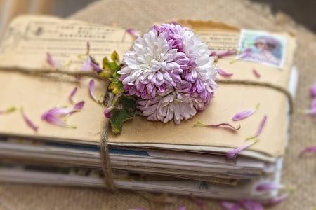white and purple chrysanthemums on envelopes