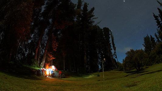 tent near green leaf tree