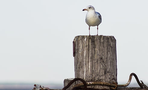 white bird perched on gray log