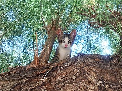 brown tabby kitten near tree