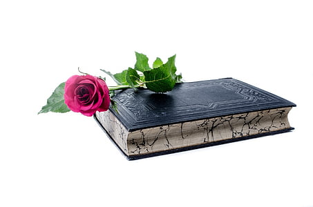 pink rose on top of book