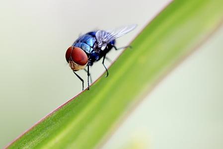 macro photography of blue flies