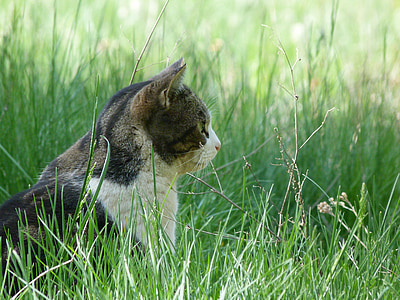 brown and white tabby cat on green grass
