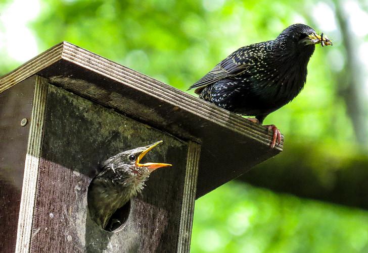 black bird on top of brown wooden birdhouse