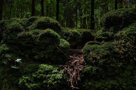 green mossy forest view