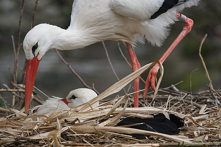 two white birds on nest