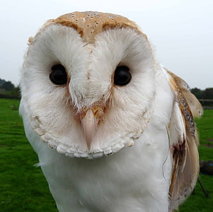 white and brown owl during day