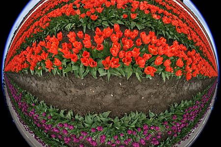 little planet photography of purple and red tulip forming an eye