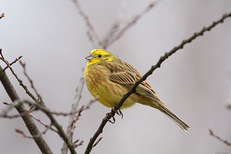 depth of field photo of yellow bird perchs