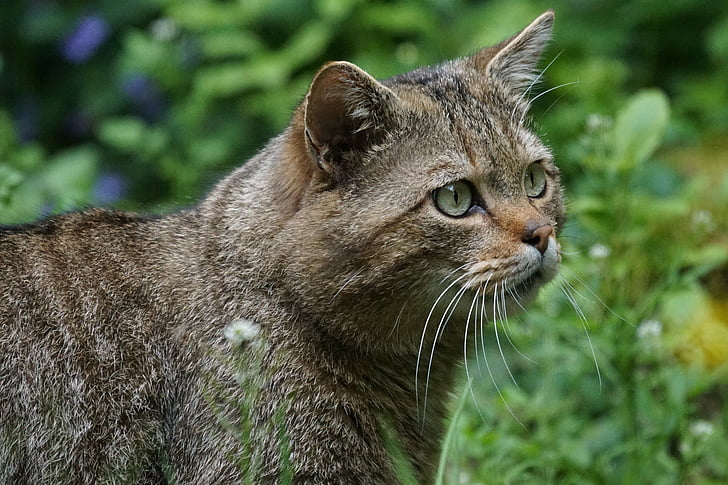 short-fur cat in forest
