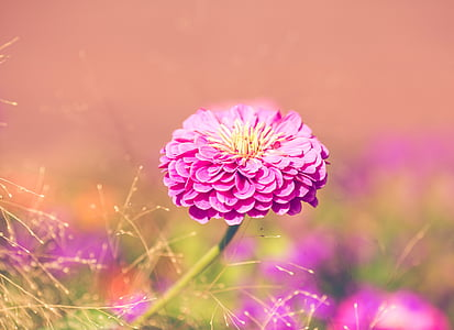 close-up photography of pink petaled flower in bloom during daytime