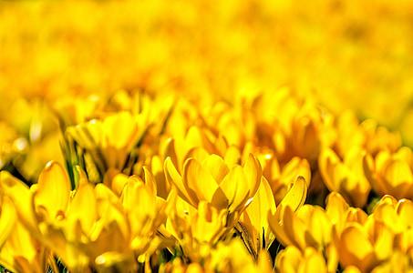 yellow flower lot