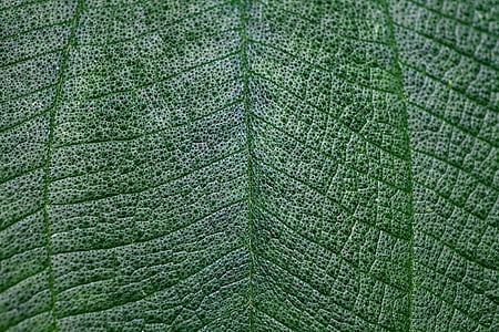 leaf, macro, green, texture, light, close-up